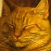 violetcheetah: (OhJay)