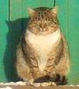 vadim_i_z: (Лошицкий кот)
