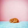 fishsticks: a cat curled up sleeping (cat)