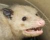 salamatik: (rat)