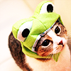 enamoured: a kitty with a frog hat on. (i has frog on hed)