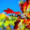 lynnie: (Autumn leaf)
