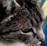 donata: (Wise Cat)