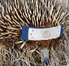 ext_376090: An echidna wearing a ninja headband (squee)