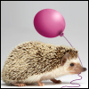 quillori: hedgehog with a ballon (comment: Happy Birthday)
