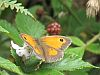 peaceful_sands: butterfly (Default)