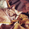 ext_559948: (kitty glasses, so cute and fast asleep)