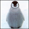 belinda: (penguin)