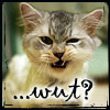 chomiji: Kitty does not understand!  A kitten snarling, with the word 'wut?' as a caption (kitty - wut)