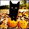 the_dark_mark: (sarahrose's Autumn Kitty)