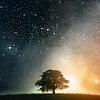 ofearthandstars: A single tree underneath the stars (Lone tree)
