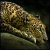 monkeypie: (jaguar)