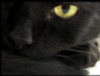 galligaskin: (black cat)