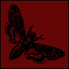 ext_112554: Picture of a death's-head hawkmoth (Default)
