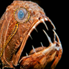 soc_puppet: Deep sea fish wearing a monocle (Monocle Fish)
