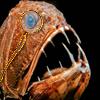 soc_puppet: Deep sea fish wearing a monocle (Monocle Fish)