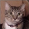 tim: A brown tabby cat's face. (Default)