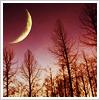willowmoon: (Moon)