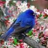 callmecathy: Blue Bird (Default)