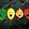 feuille: leaves with cut-out shocked faces (the leaves are shocked and appalled)