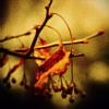 teagarden: (pic#6573193)