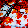 abreuvoir: (leaves - red)