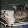 patches_the_shipcat: (hammockcat)