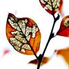 biggelois: (löv)