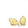 nightdog_barks: (Ducklings)