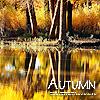 distilledheart: (autumn)