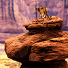 bedlamsbard: animals: a cougar standing on a tall rock (girlyb_icons) (a high place (girlyb_icons))