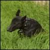 calenturian: (it's a little dog)