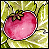 jjhunter: Watercolor tomato resting on radiating stalks of lettuce (tomato)