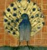 12mowrimo: (peacock)