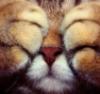akimesalt: (cat, kitten)