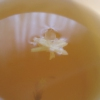 amaryllisdreams: Jasmine blossom in a cup of jasmine green tea (Default)