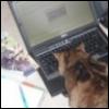 9worlds_fanfic: (Ozymandias_cat)