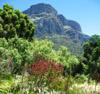 mec: (Kirstenbosch)
