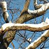 15_the_circle: (snow oak)