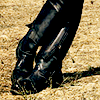 highlyeccentric: Black boots and leather pants, ankles crossed, against brown grass (Chris Pine, Details shoot) (Boots - CFine)