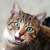 t_fischer: (cat face)