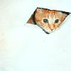 smallwolf: it is ceiling cat (ceiling cat)