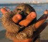 switterbeet: (happy sloth)