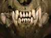 switterbeet: (hyena teeth)