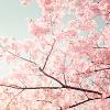 cerberusia: (cherry)