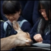 matryoshika: There is a doe lying her head on the bag of two asian students, who are looking at the door in surprise. (bambi, cervidae, deer, me)