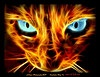 firecat: cat face made of flames (firecat1)