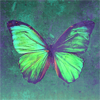 toad_sweat: A butterfly with green and purple wings on a green background. (Butterfly)