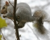 nightspear: (Squirrel1)