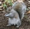 nightspear: (Squirrel2)